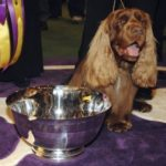 Westminster Dog Show 2009 Winner – Photos and Video