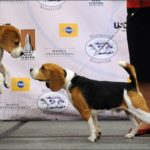 Westminster Dog Show 2009 – Photo & Video
